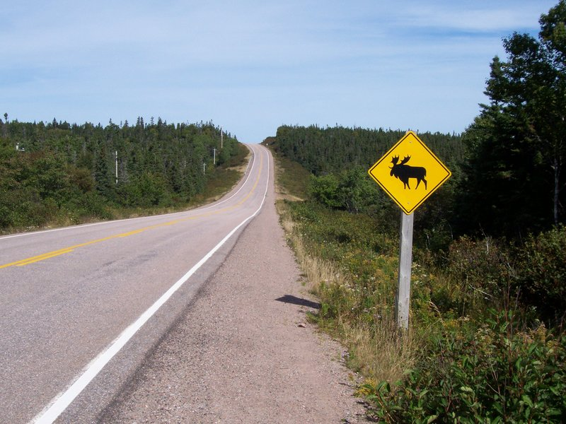 Watch out for moose! Nova Scotia
