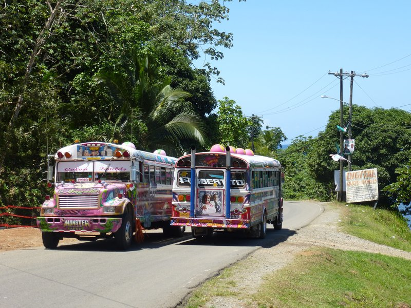 Colourful Buses
