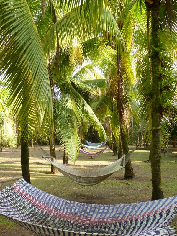 Medium image of laidback hammocks  pococ   costa rica    travellerspoint travel photography