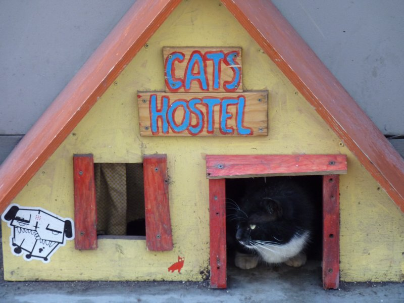 Cats Hostel, Riga