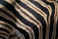 Zebra pattern, Pilanesberg