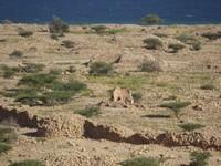 Qalhat Unesco Site