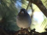 Bird at Teide National Park, Tenerife