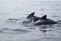 Synchronizing whales