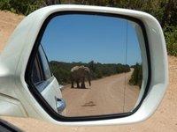 Elephant in the mirror, Addo