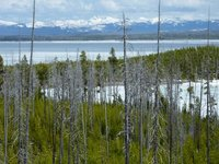 Landscape of Yellowstone