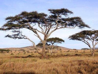 Classic Serengeti landscape, Tanzania