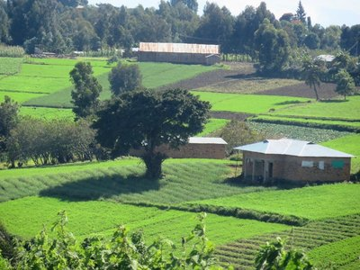 The green landscape of southern Tanzania