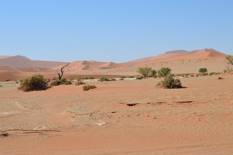 large_Dunes__22_.jpg