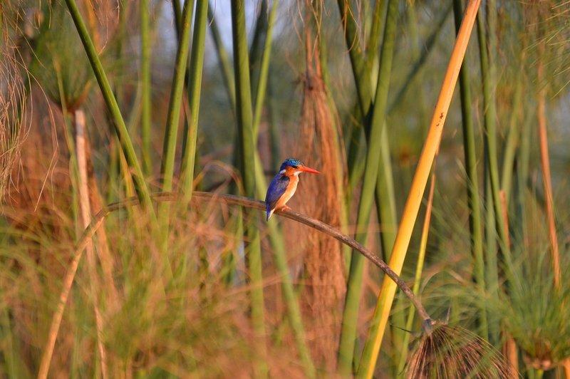 large_Okavango1__6_.jpg