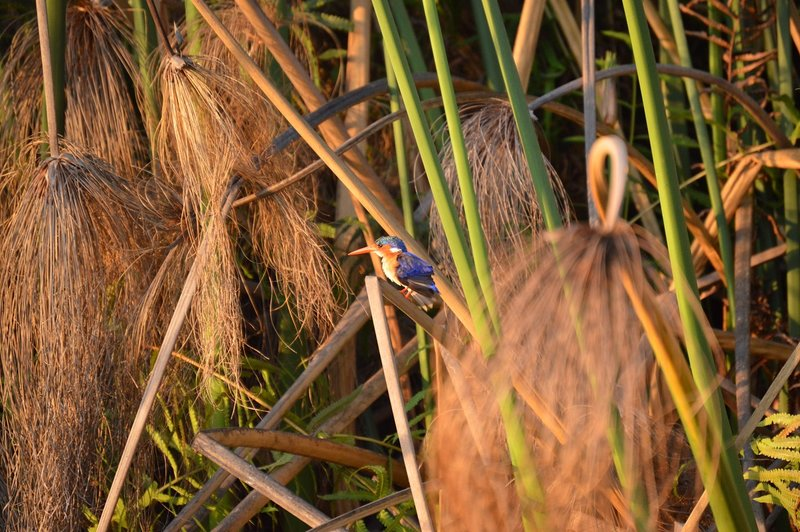 large_Okavango1__7_.jpg