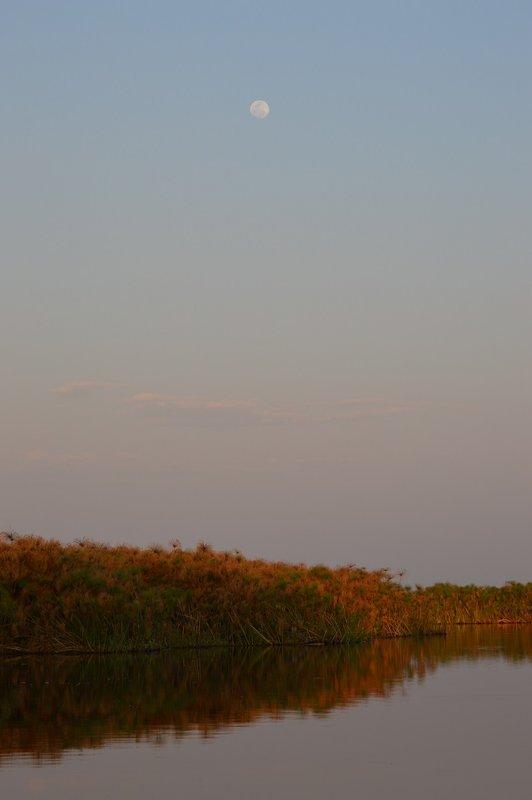 large_Okavango1__8_.jpg