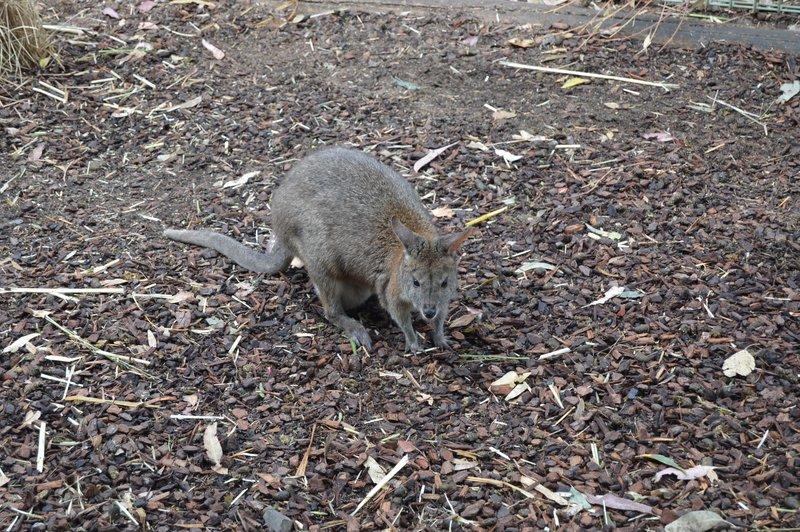 large_Sydney01__5_.jpg