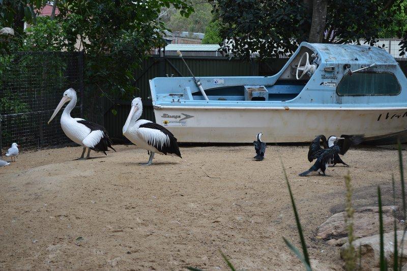 large_Sydney01__6_.jpg