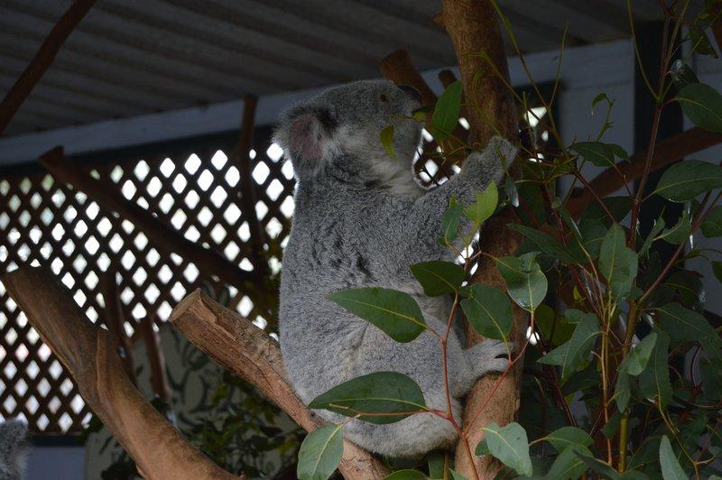 large_Sydney01__8_.jpg