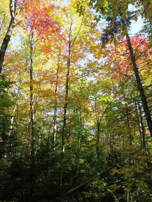 Fall Foliage on the Appalachian Trail
