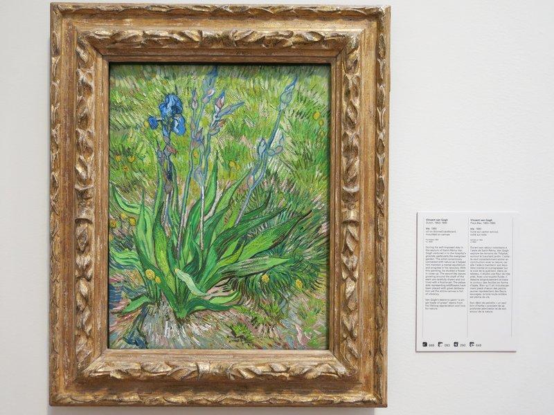 Vincent Van Gogh's Iris