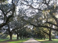 Boone Hall Plantation, Oak alley