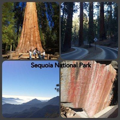 20150123_Sequoia_NP__1_.jpg