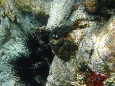 underwater..hn_2012_121.jpg
