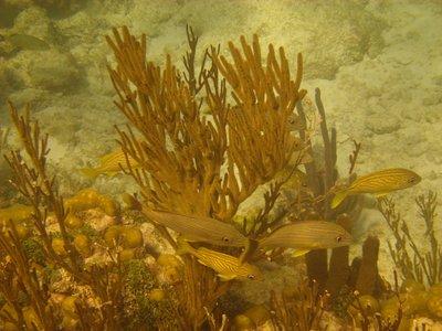 Belize_Underwater_0261.jpg