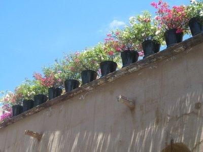 San Miguel roof flowers