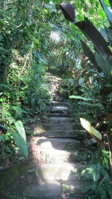 Xilitla steps in the Los Pozas