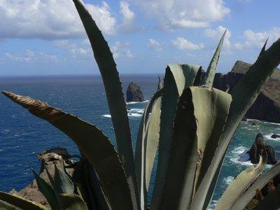 Madeira_033.jpg