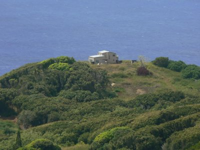 Pitcairn_Islands_242.jpg