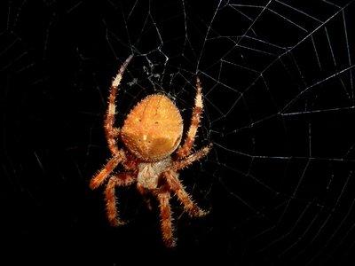 Pantelleria_Sicily - Spider attack