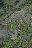 Rice terrace between Pula and Cambulo, North Luzon