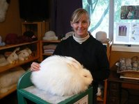 Rabbit shearing in Waitomo