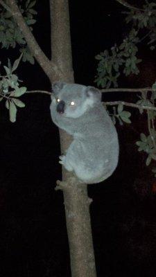 90_13_07_koala_village_2__4_.jpg
