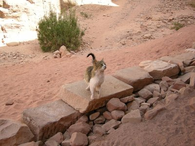 Our_new_friend_from_Petra.jpg