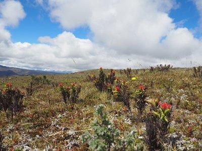 alpine flowers 3
