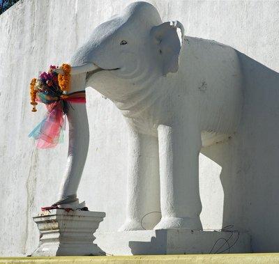 chiang_mai..le_elephant.jpg