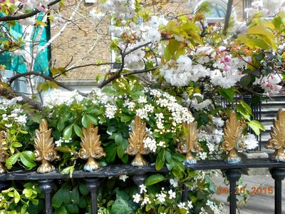 Merrion_Rd_gate_blossoms.jpg