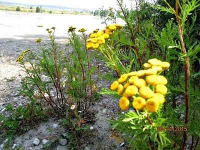 Teton_jacksonlake_yellow.jpg