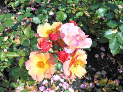 bot_roses2.jpg