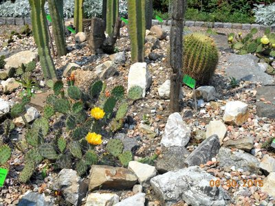 bot_succulents.jpg