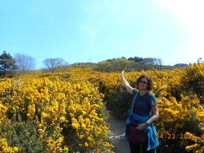 hike_gold_a.jpg