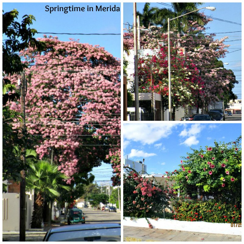 large_Merida_Spriing_col.jpg