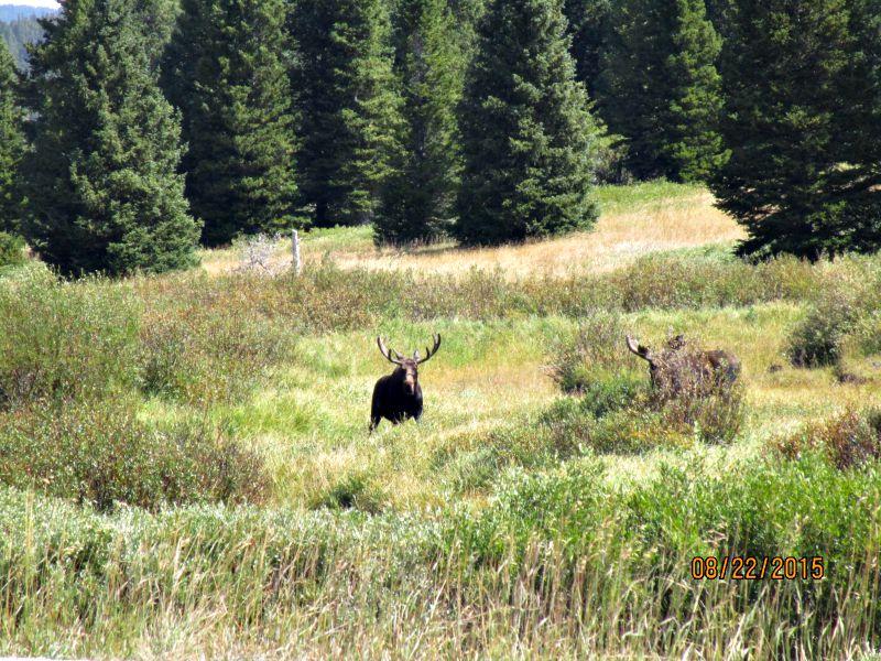 large_moose_sighting.jpg