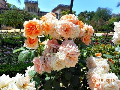 sevilla_PML_roses.jpg