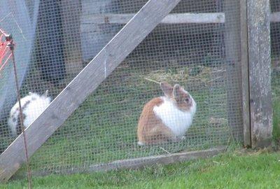 Bunnies in their hutch