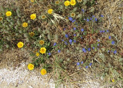 Pretty blue flowers