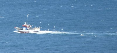 A fishing boat coming to shore with a following of sea birds