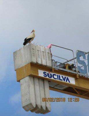 Stork on crane