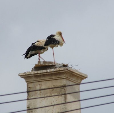 Two storks on a chimney
