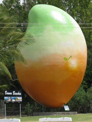 Another giant mango